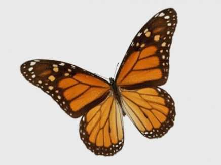 Animated Butterfly