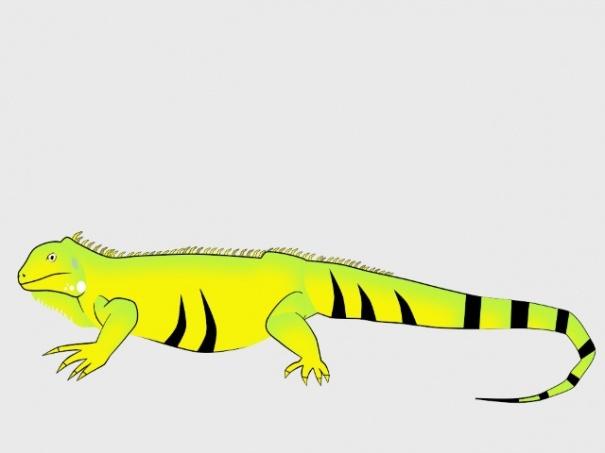 My Iguana