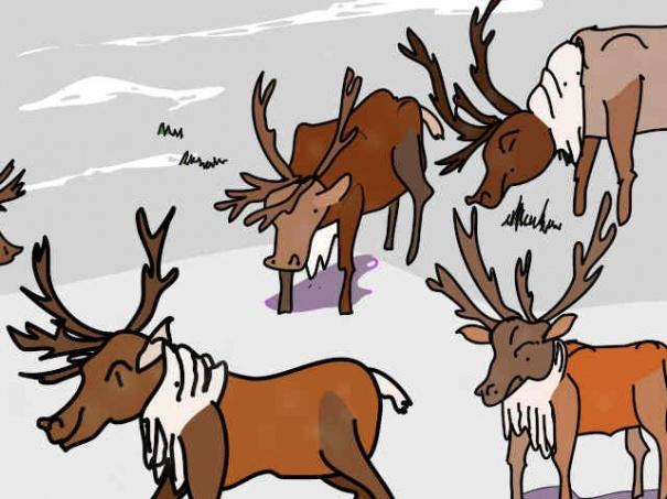 Reindeer A True Tale